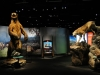 Admission to Mammoths And Mastodons Included In Ticket Price
