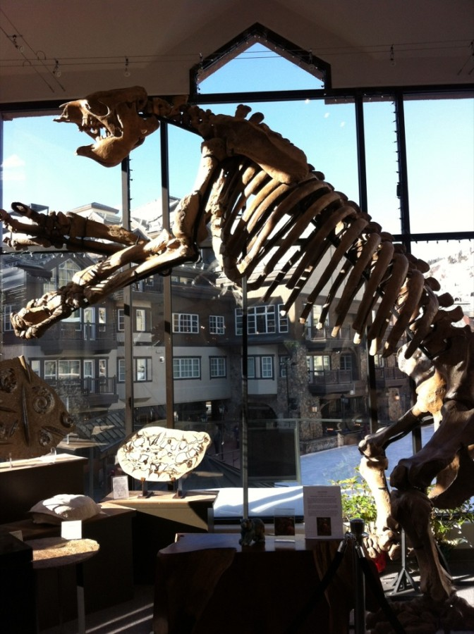 By nature gallery sells both fossils on a large and smaller scale, decorative objects for homes and a collection of meteorites and minerals.