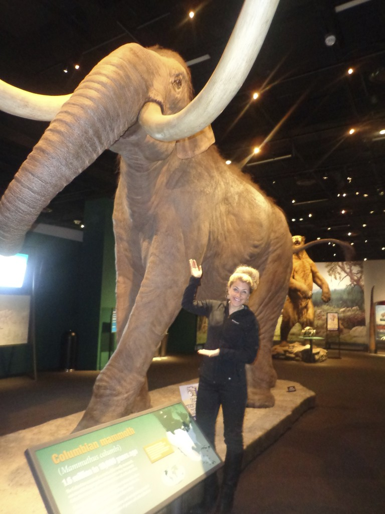 Mammoths & Mastodons at DMNS