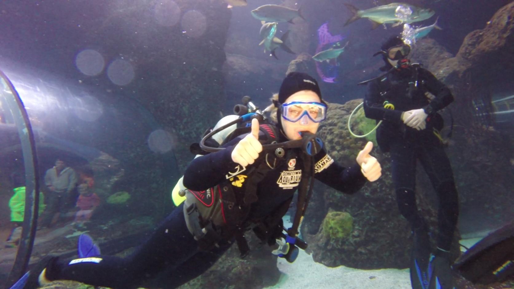 Snorkeling Scuba Diving At The Downtown Aquarium Denver